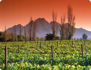 Winelands_Franschhoek, South Africa
