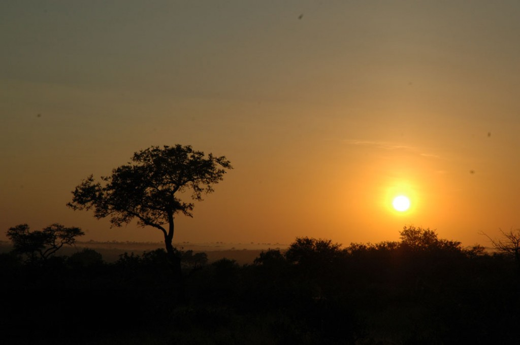 Sunset in the Timbavati