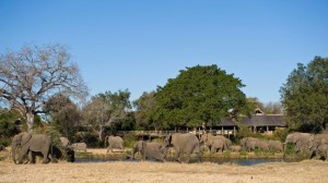 Game viewing in Sabi Sands Private Reserve
