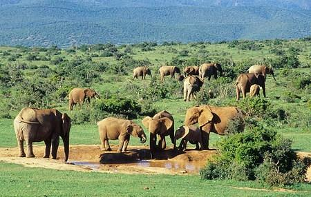 Addo National Park - Eastern Cape - South Africa