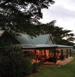 Camp Fig Tree