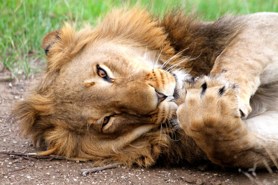 Big 5 - Wildlife Safari - Luxury Lodges