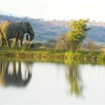 elephant-rock-private-safari-lodge-elephant