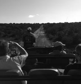 Safari on Kwandwe