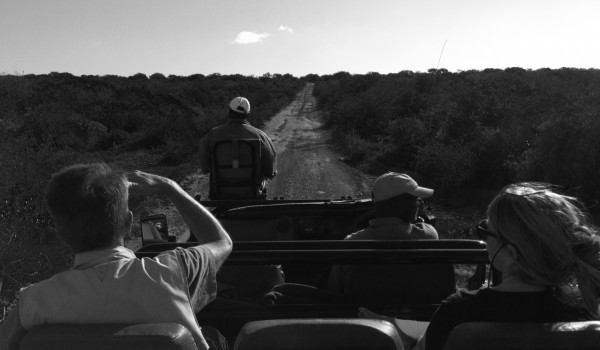 Safari on Kwandwe